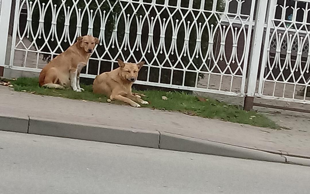 Ogłoszenie- Zapraszamy do skorzystania z bezpłatnej adopcji psów!