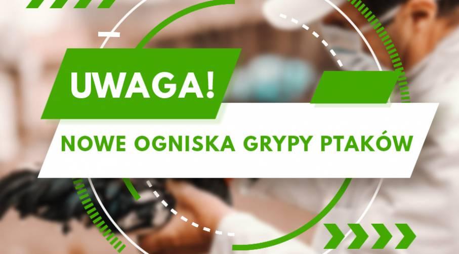 WYSOCE ZJADLIWA GRYPA PTAKÓW!